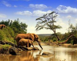 kenya-national-park-elephants-cover