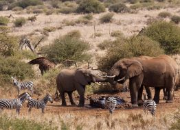 Satao-Elerai-amboseli-national-park-zpskenyasafaris.com-elephants-around-water-hole