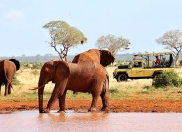 game-drive-satao-luxury-camp-tsavo-east-zpskenyasafaris.com